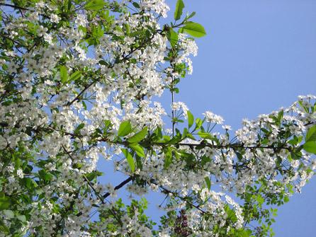 Скачать обои для рабочего стола Весна, весенние и красивые картинки.